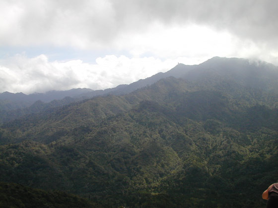 Upper Yakushima Forest